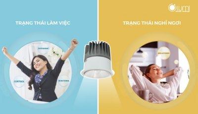 Hiểu về HCL - Công nghệ chiếu sáng có lợi cho nhịp sinh học con người